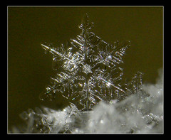 ~ Snow Flake ~ (ViaMoi) Tags: snowflake winter snow canada macro ice geometric crystal ottawa flake cybershot canadian supermacro supershot abigfave platinumphoto theunforgettablepictures viamoi flickrlovers 100commentgroup 41mp