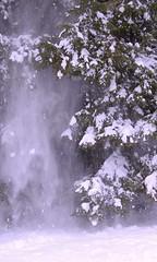 mini avalanche (n.t.) Tags: winter white snow cold tree misty fog pine snowy maine january foggy mini blizzard inauguration avalanche barack snowey 12009