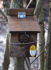 Dormouse winter quarters