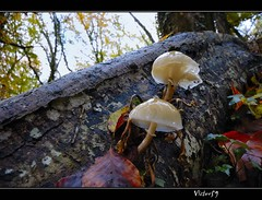 Sottobosco (sirVictor59) Tags: color tree nature mushroom topf25 clouds forest woodland outdoors moss woods nikon colorf