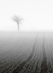Foggy (Philipp Klinger Photography) Tags: winter sky bw white mist tractor black tree field grass lines rain fog germany deutschland nikon europa europe hessen bright branches bad foggy tracks trails tele sw minimalism philipp weiss minimalistic schwarz hesse nauheim klinger wetterau topofthefog aplusphoto nikon70300mmvr d700 infinestyle dcdead wisselsheim nikon703000mm