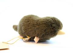 Japanese shrew mole