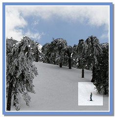 skier (Polis Poliviou) Tags: morning blue trees winter sky white mountain snow ski cold tree nature beautiful weather pine clouds forest canon wonderful landscape eos frozen photo flickr frost skiing cyprus pines snowboard february skier olympos snowglobe polis troodos nicosia naturesfinest supershot specland excellentscenic mediterraneanpines mediterraneanpine poliviou polispoliviou cypruspine troodospine