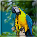 Parrot by edwin.donnelly
