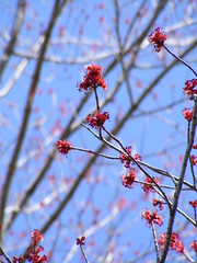 Red Bud Bokeh (JWGPhotography) Tags: trees sky nature wow spring natural bokeh awesome bloom buds limbs otw