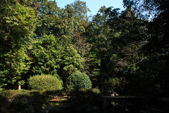 大麻比古神社 鎮守の森
