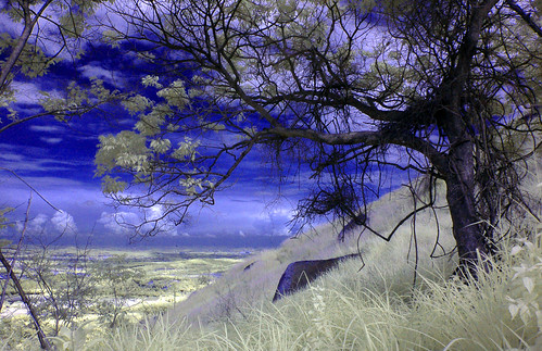 Broga Hill | The Tree (IR)