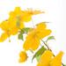 0904 flowers B #4