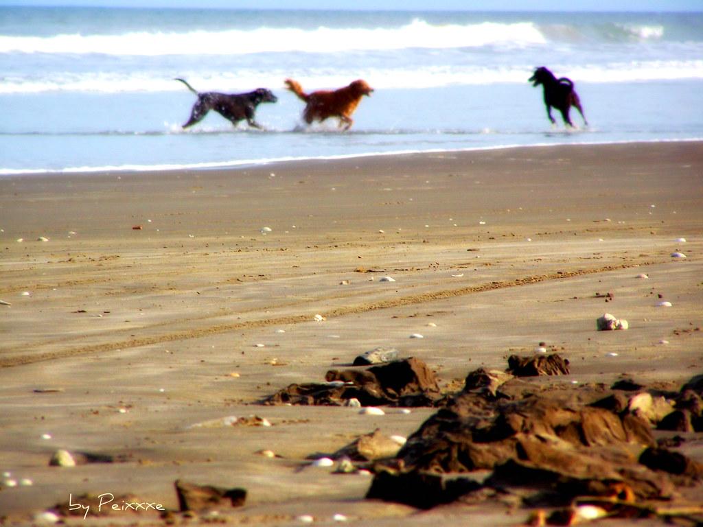 036/365 - Vira-latas na Praia