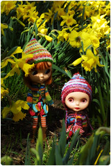 Daffodil jungle