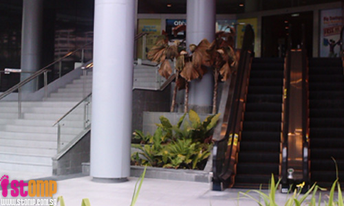 Unsightly dead plants at AMK Hub spoils S'pore's green and clean image