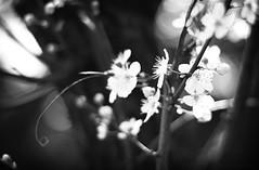 Boadicea (Andrea Massimini) Tags: flowers photography eos photographer andrea dreams modelling enya massimini andreamassimini