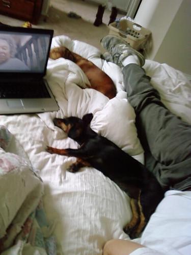 Sleepin pups.