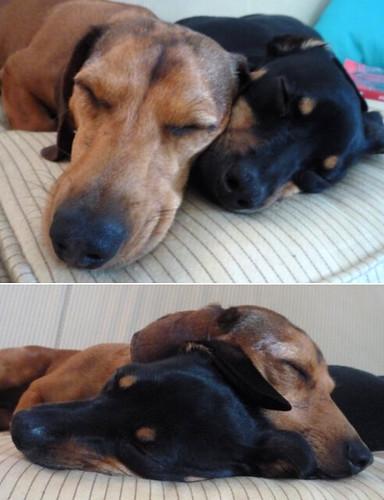 Cuddlin pups.
