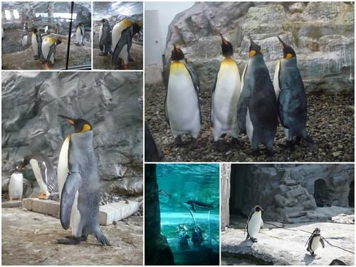 你拍攝的 旭山動物園10。