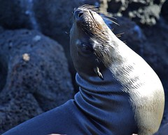 Sea Lion Stares Back