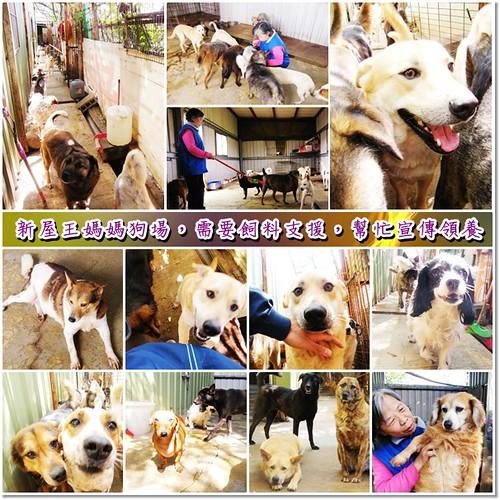 「募資源認養」桃園新屋王媽媽狗場約有80幾隻狗狗,有在照顧,懇請捐助飼料或是幫忙宣傳領養,轉PO也是很重要,謝謝您,20100513