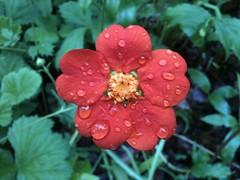 After May Rain 5