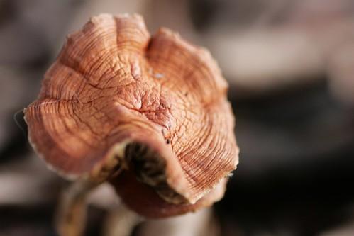 Day 141 - Fungi