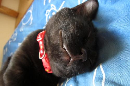 睡著了,眼睛在微笑