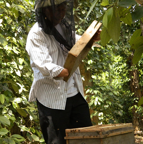 Mr. Phong thoroughly inspecting one of his hives