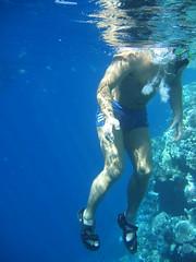 137_3726 (LarsVerket) Tags: egypt snorkling fisk undervannsfoto