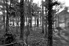 forest (ludwig van standard lamp) Tags: trees bw lensbaby forest highcontrast creativecommons selectivefocus