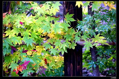 nEO_IMG_IMG_3874 (c0466art) Tags: old trip blue autumn trees light house color green yellow japan canon landscape gold maple scenery age noon famouse samural