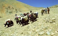 Descending Lamma La 5120m (reurinkjan) Tags: 2002 nikon tibet everest tingri jomolangma tibetanlandscape janreurink བོད། བོད་ལྗོངས།