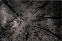 ... SDIM3335 (*melkor*) Tags: trees winter sky storm cold art nature monochrome clouds landscape geotagged solitude experiment silence conceptual melkor