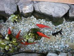Kyoto Goldfish, Ninenzaka