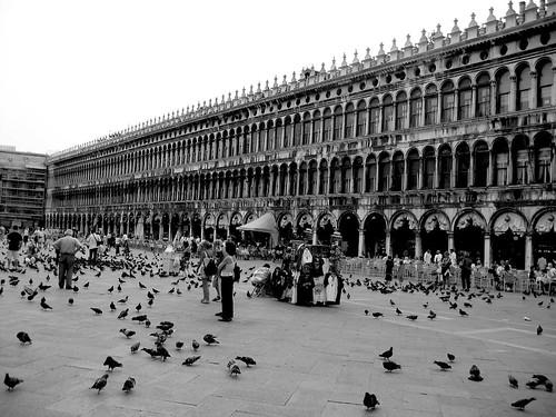 Piazza di San Marco Pigeons