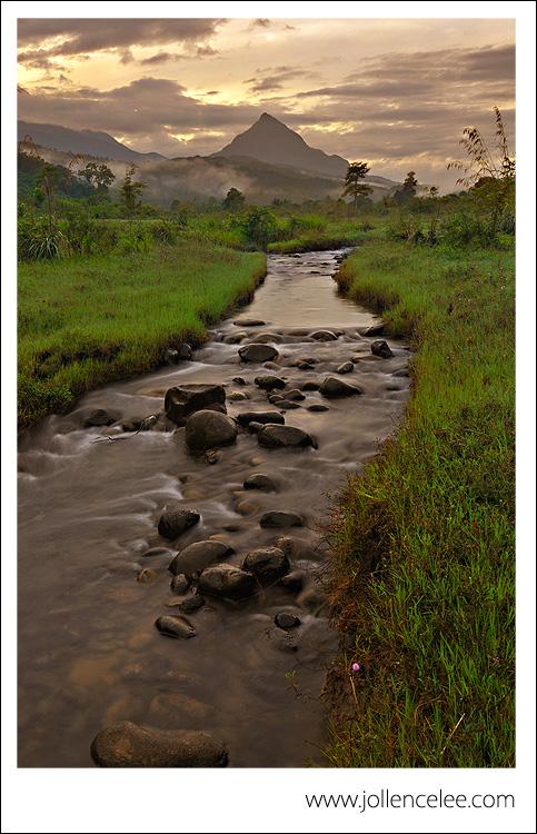 Little Creek At Dawn
