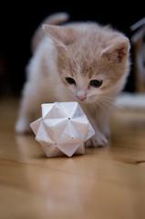 Lyra & geometry