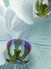 orquideas (joao barroca) Tags: riodejaneiro jardimbotnico 180mm clubefotorio cfrj markiii1ds