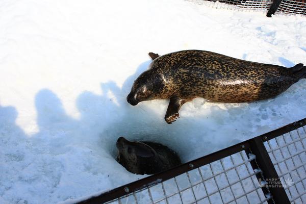 2009北海道-D5-3-旭山動物園_75.jpg