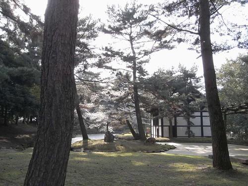 09-04-05【桜】@奈良公園-01
