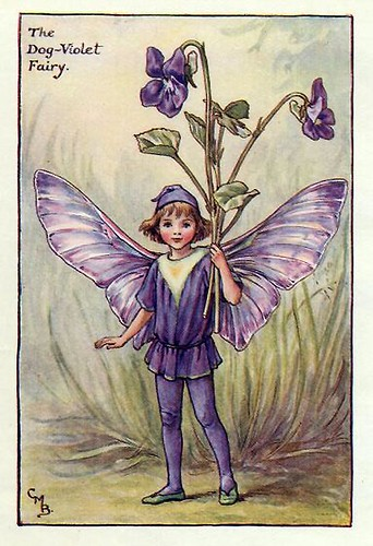014-dog-violet_flower_fairy