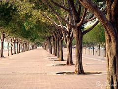 Some trees , Arabian Gulf Street, Near the kuwait towers (Saad Al-Enezi) Tags: sea tree green beauty nikon dof secret side kuwait saad d90 arabiangulfstreet sometrees flickraward nearthekuwaittowers alenzisaad