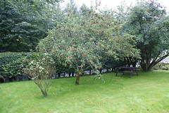 perthshire (gmj49) Tags: trees scotland sony perthshire m gmj a350 bestofbritishnature photosrus