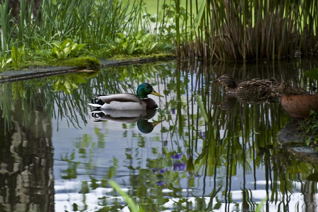 The world 39 s best photos of carpas and estanque flickr for Carpas estanque