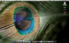 Shimmering Peacock desktop (TerryJohnston) Tags: desktop wallpaper bird apple macintosh dock mac icons mail screengrab feather peacock screencap fowl screencapture finder pixelgirl pixelgirlpresents macbook natalieparker
