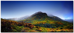 Misty Mount Zeus... (Chantal Steyn) Tags: wild panorama mist mountain photoshop landscape moss nikon peak panoramic explore zeus vegetation bracken nikkor tussock treefern d300 nohdr mountzeus nikkor1685mm goughisland