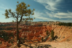Tree at Bryce Wants to Walk Away With The Clouds (redrijn) Tags: park red sky orange tree green nature rock canon walking landscape rebel xt utah rocks nps peaceful canyon filter national hoodoo bryce dslr root polarizer exposed ef1740mmf4lusm