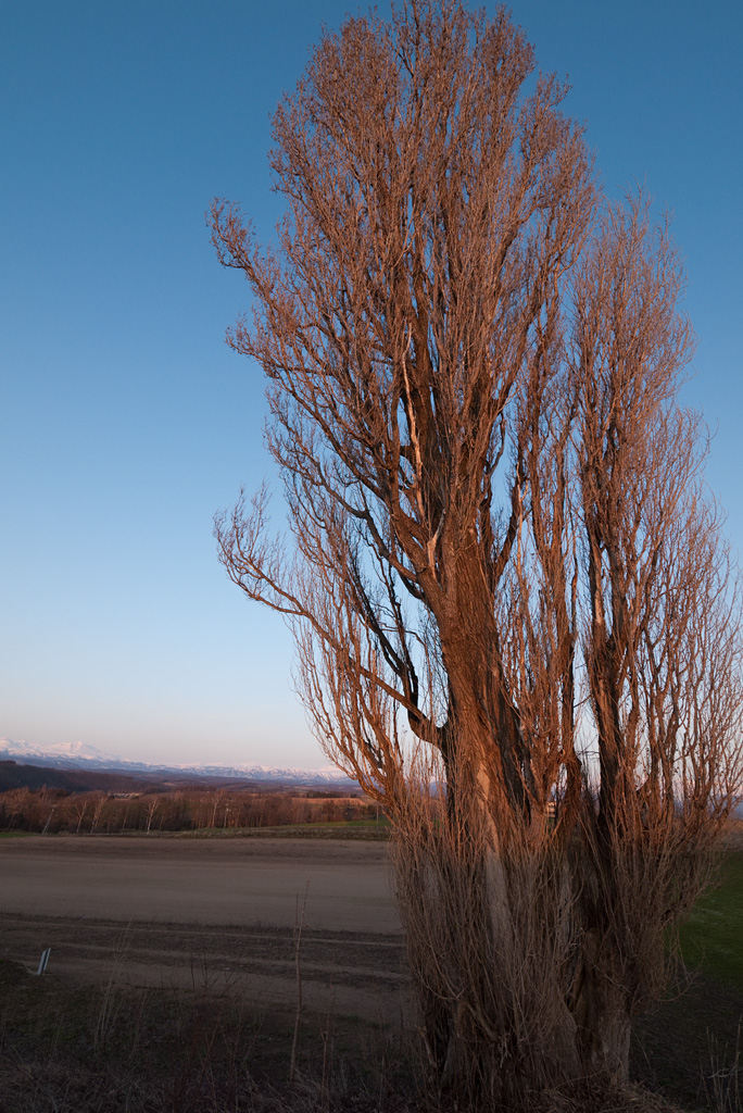 Ken and Merry's tree at dusk of early spring