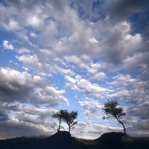 Foto: Consejo de un árbol a una pareja