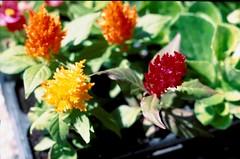 img.5 (davide9111) Tags: flower macrophotograph