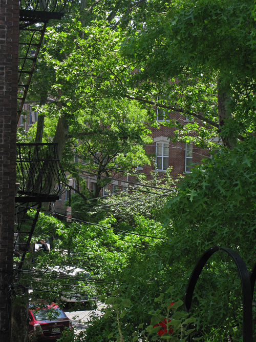 a peek at a street and buildings through leafy trees