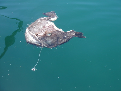 dead fish head