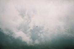 (MilkyAir) Tags: sky bird film clouds analog fuji iso400 praktica mtl3 milkyair